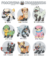 Poochyena Crossbreeds by mr-tiaa