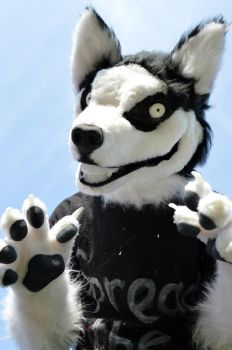 Smile Dog Fursuit by Metal-CosxArt