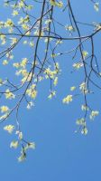 Spring Branches by DaiYiCordelia