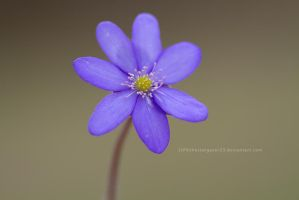 liver flower by thestargazer23