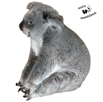 Cut-out stock PNG 117 - wise koala by Momotte2stocks