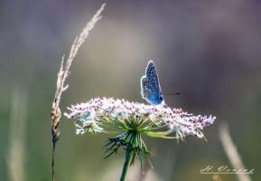 butterfly by hubert61