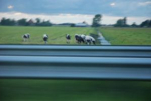 Seven Cows at Top Speed? by Liko