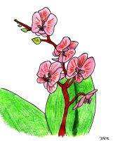 Pink Orchid by DwDrawings