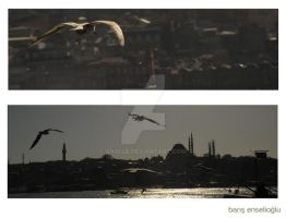 seagull by enselb