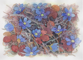 Hepatica nobilis (frost) by isletree