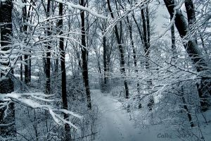 Winter in the Forest II by Callu