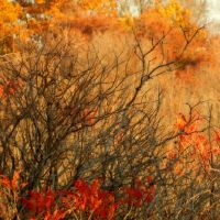 Shades of Autumn 2016, 2 by MadGardens