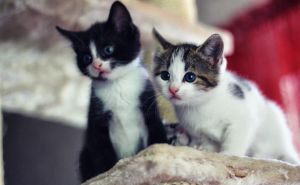 kittens by GrinBeam
