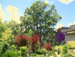 Edwards Gardens Photomanipulation 2 by debquigg