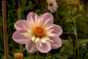 Old flower by Cathorse