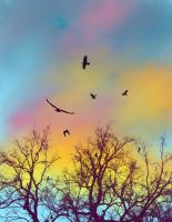 Crows at Sunset by katiejo911
