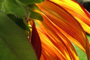 Summers Flame by a-kid-at-heart