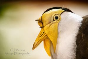 Yellow Face by GJ-Vernon