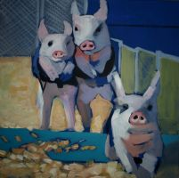 race pigs by tomaszpoz