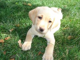 My puppy laying on the grass by LadyNatt
