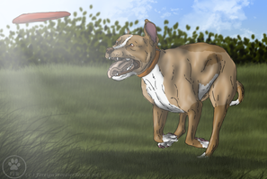 APBT and Mixes Show - Frisbee - Dill (Chasing) by ForeignFrontierRanch
