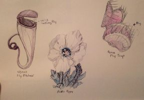 Sketch Flowers Plants by JunkoAn