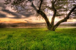 Spring Sunset in the Mist by IraMustyPhotography