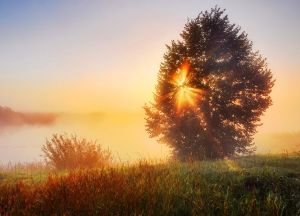 The tree blocking sun dawn by hitforsa