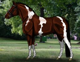ISI Lord Of The Dance - SOLD by Decorum100