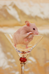 A Glass of Hamster by whensummerends
