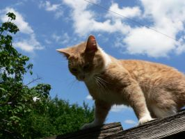 Cat on the roof 2 by Aslehill12