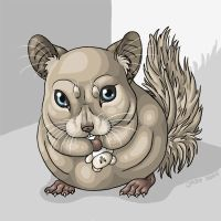 Chinchilla by Feathers-of-Love