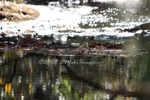 Fires Creek by SassyPants61762