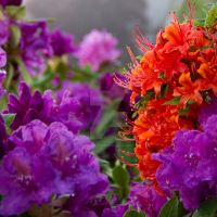 Purple and orange by paradoxofminds