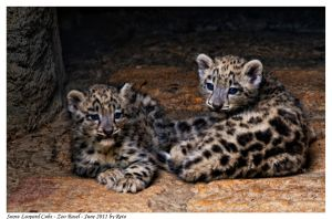 Snow Leopard Cubs 2 by Reto