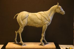 Horse Ecorche - Day 10 by aerie-