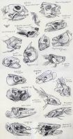 Fish Skull Studies by yolque