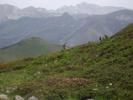 an ibex near fort giaura by FraterSINISTER