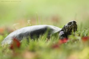 turtle by unbelievablex