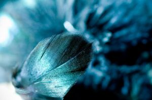 Feather by Punkybrewster80