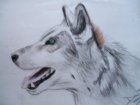 Wolf :3 by okibecht