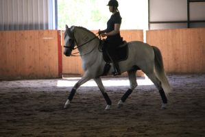 Andalusian 3 by Chance-STOCK
