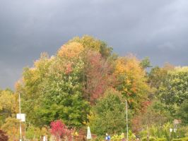 Fall Foliage - and Ominous Skies by uglygosling