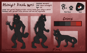 Midnight Black Wolf Reference Sheet by WindWo1f