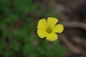 Yellow flower by stockmichelle