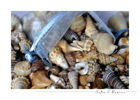 Little Blue Bag of Sea Shells by SofiaERamirez