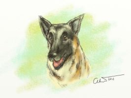 My late Dog Axel by gwendy85