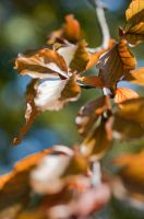 It's Fall... Leaves by uncloned