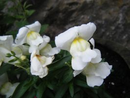Snap Dragon by LilMickey27