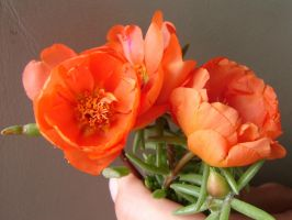 Pretty Orange Flowers by FantasyStock