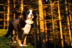 Bella and the Golden Forest by SanctuaryWarrior