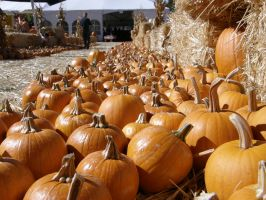 Pumpkins! by Heypolin