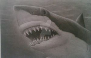 Great White by MikeAs4