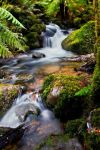 Cement Creek 2 , Yarra Ranges by fusionx